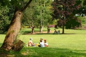 picnic2_495x330