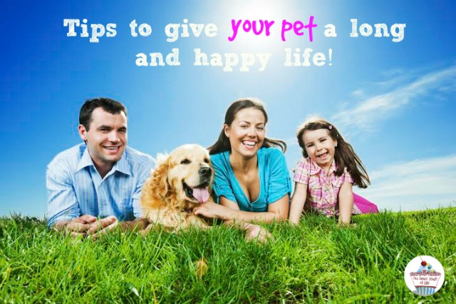 4 tips to give your #pet a long and happy life