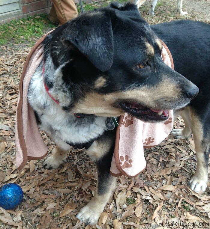 luv and emma on dog 2