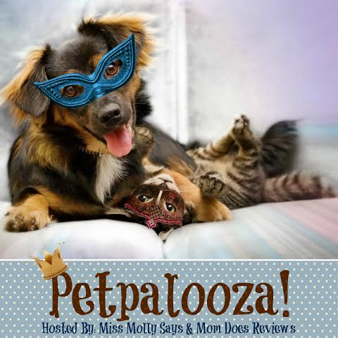 petpalooza button