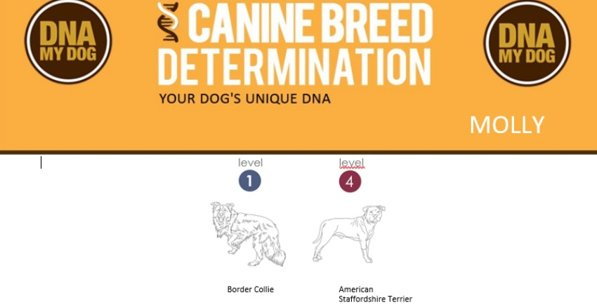 Canine Breed Determination 1