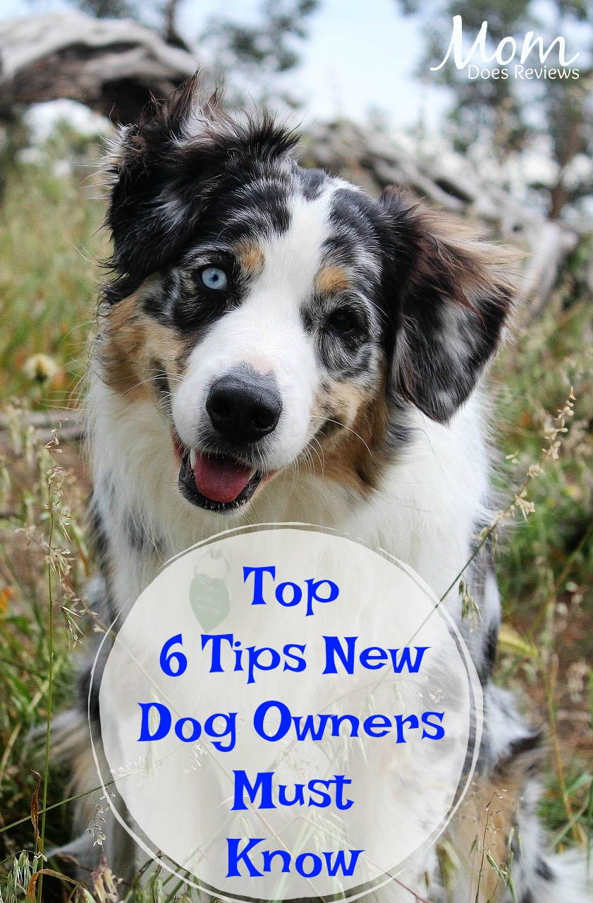 Top 6 Tips New Dog Owners Must Know #pets #dogs