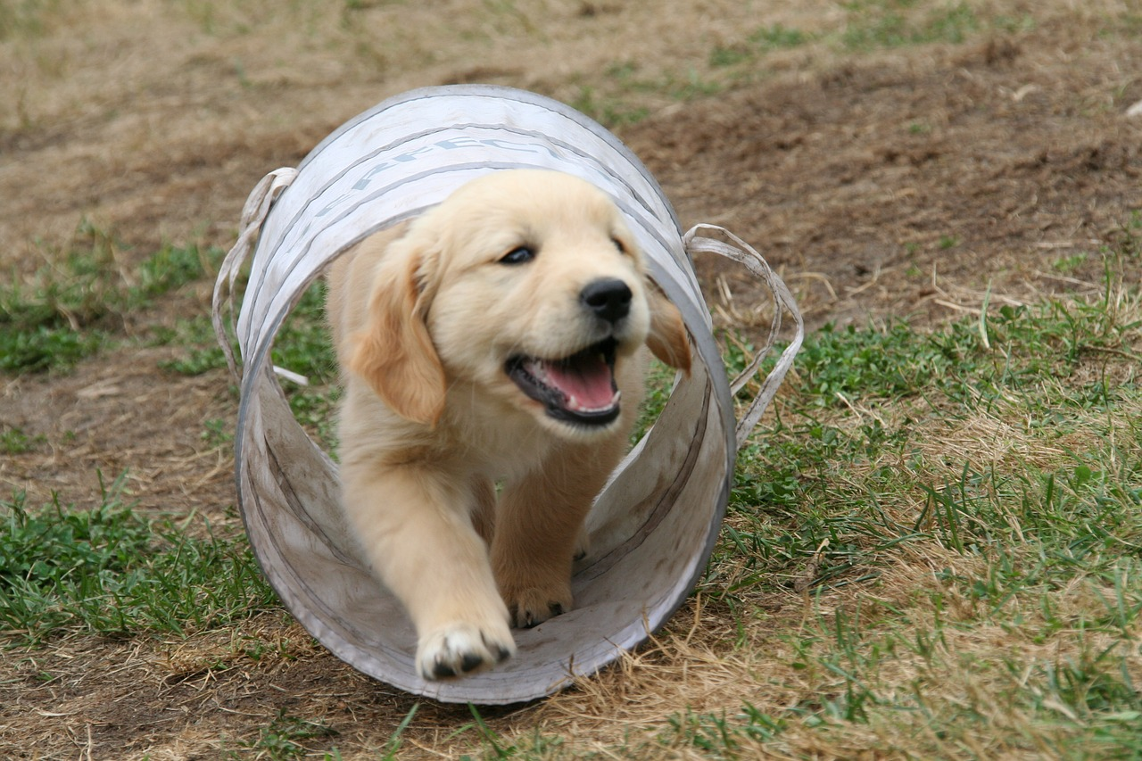 Top 6 Tips New Dog Owners Must Know
