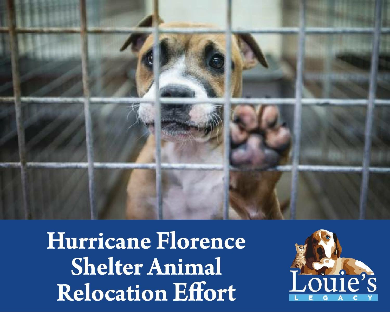 Hurricane Florence - Urgent Need for Fosters! #What'sYourLegacy?
