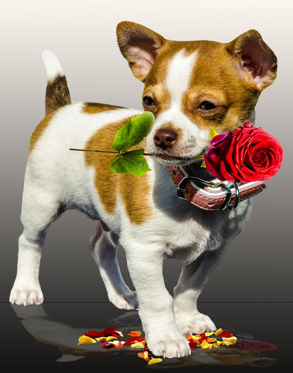 """""""The Real Power of Dog Love"""" Report Shows Dog Love Eclipses Romance This Valentine's Day"""