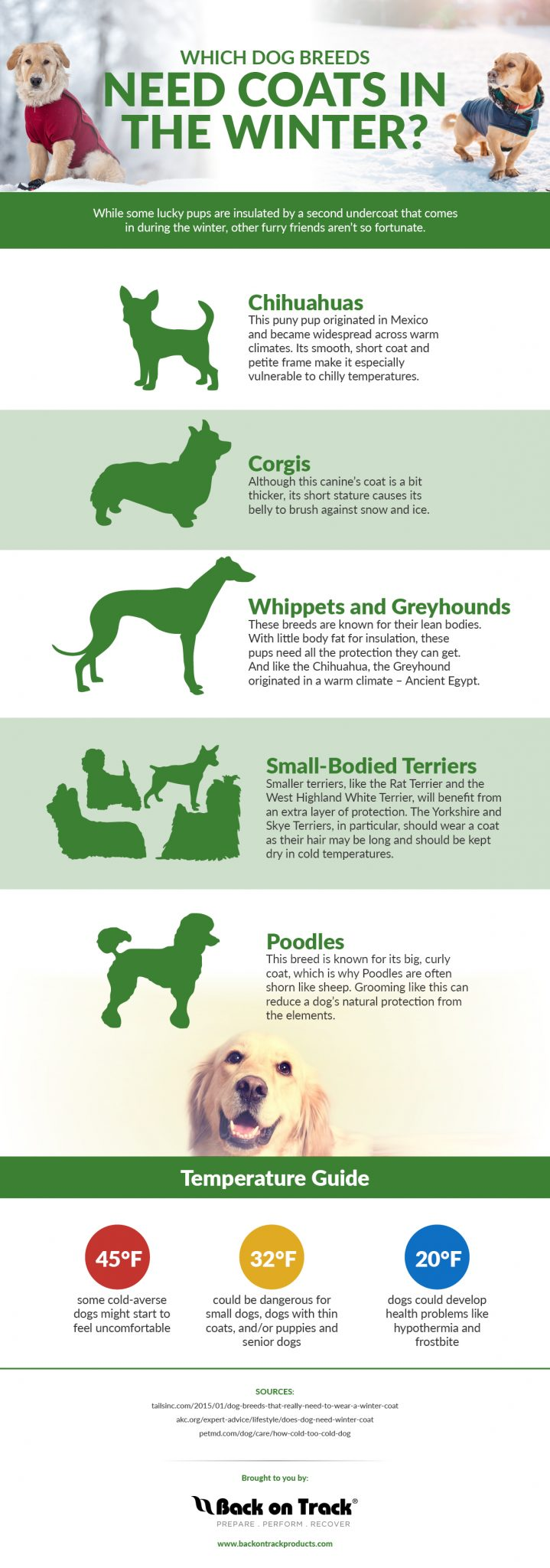 Which Dog Breeds Need Coats in the Winter? #pets #dogs #winter #petsafety
