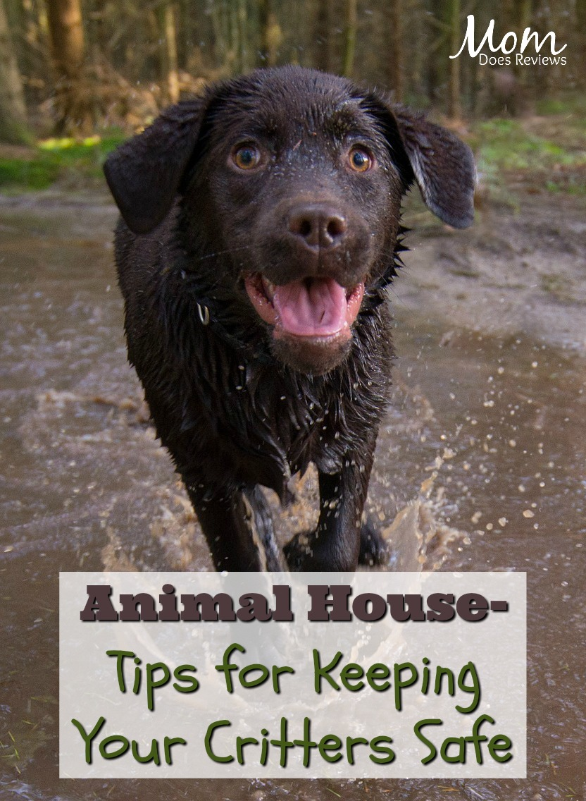 Animal House- Tips for Keeping your Critters Safe #pets #dogs #petsafety