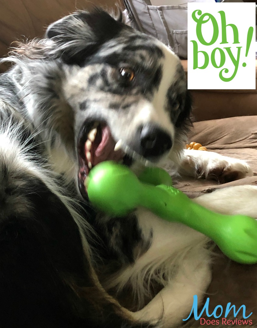 Skamp, the Newest West Paw Toy for Pups! #SpringfunonMDR