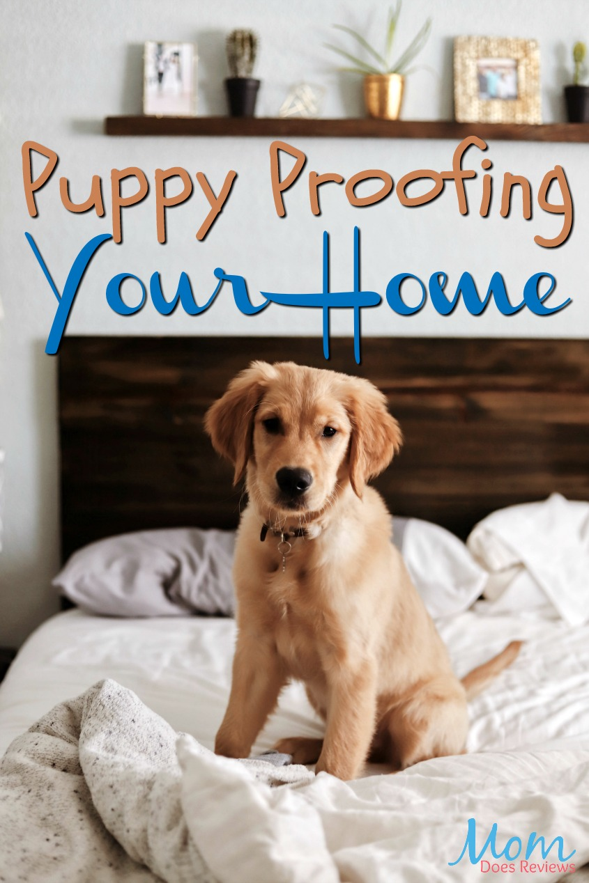 Puppy Proofing Your Home From the Inside and Out #pets #dogs #puppies