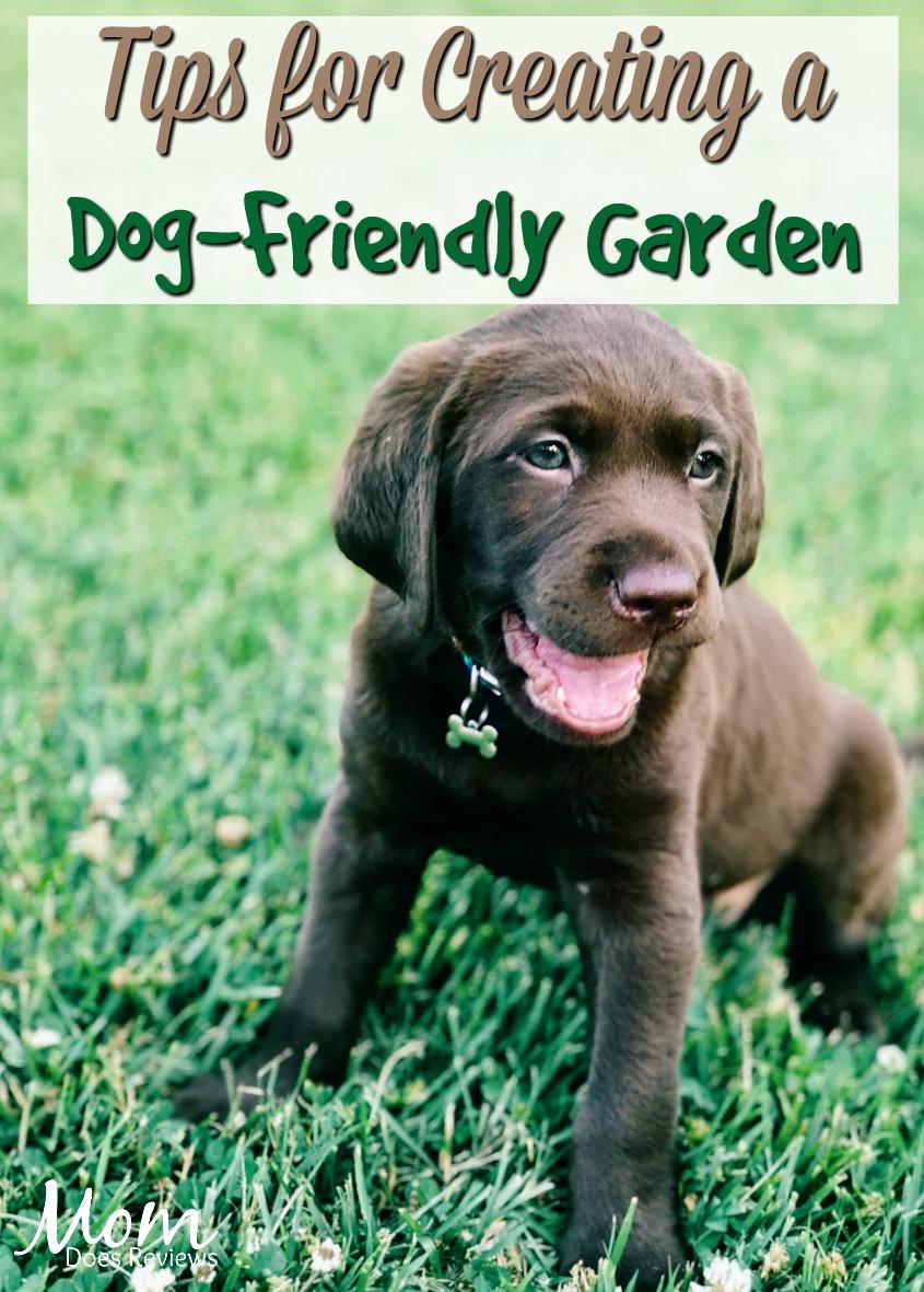 Tips for Creating a Dog-Friendly Garden