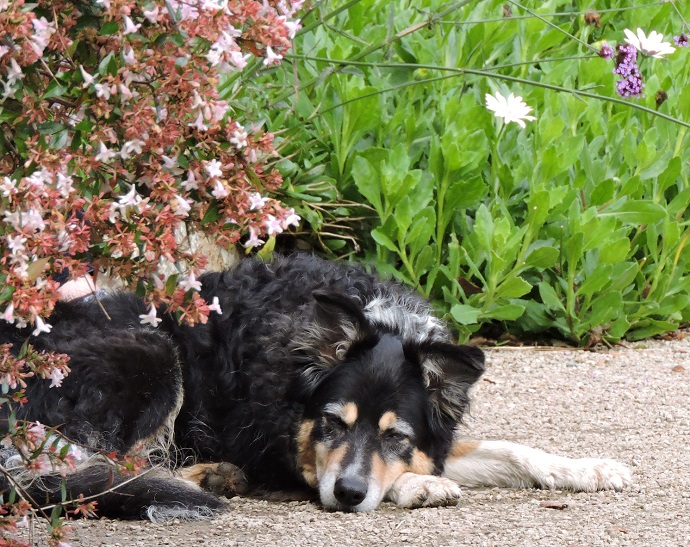 Amazing Tips for Creating a Dog-Friendly Garden
