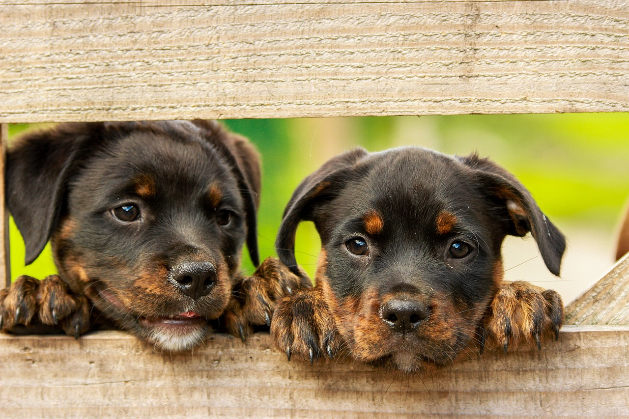 Puppy Proofing Your Home From the Inside and Out