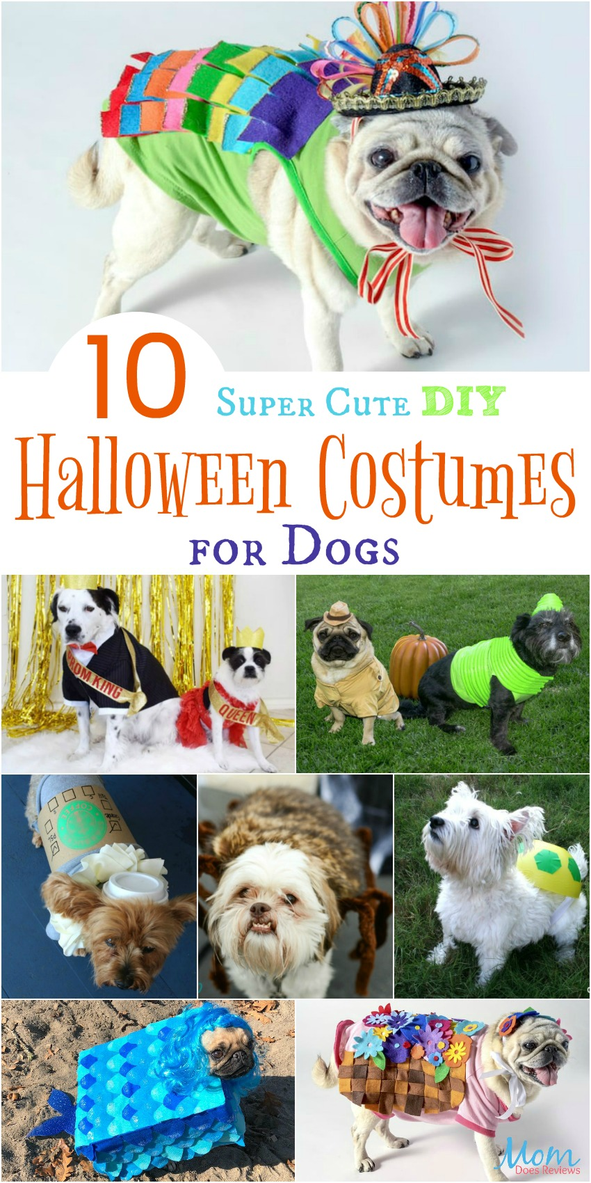 10 Super Cute DIY Halloween Costumes for Dogs #halloween #pets #diy