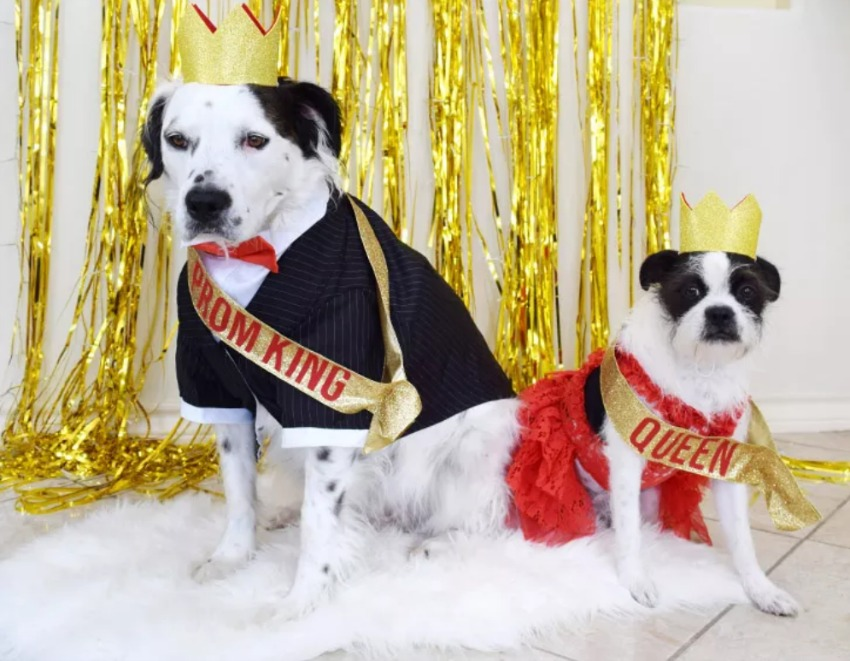 Doggo Prom King and Queen Pet Costumes