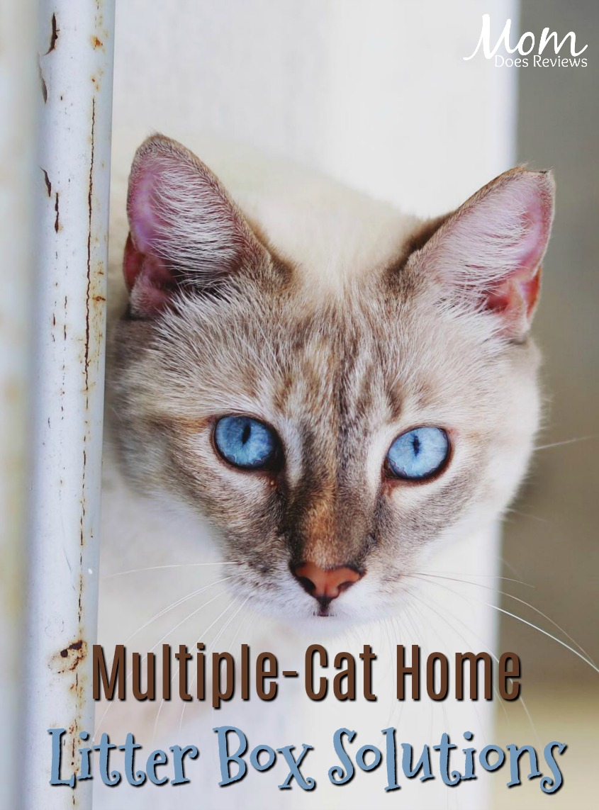 Managing a Multiple-Cat Home Using Multiple Litter Boxes