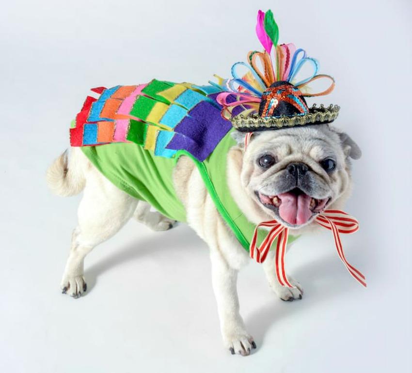 Sparkly Piñata Costume